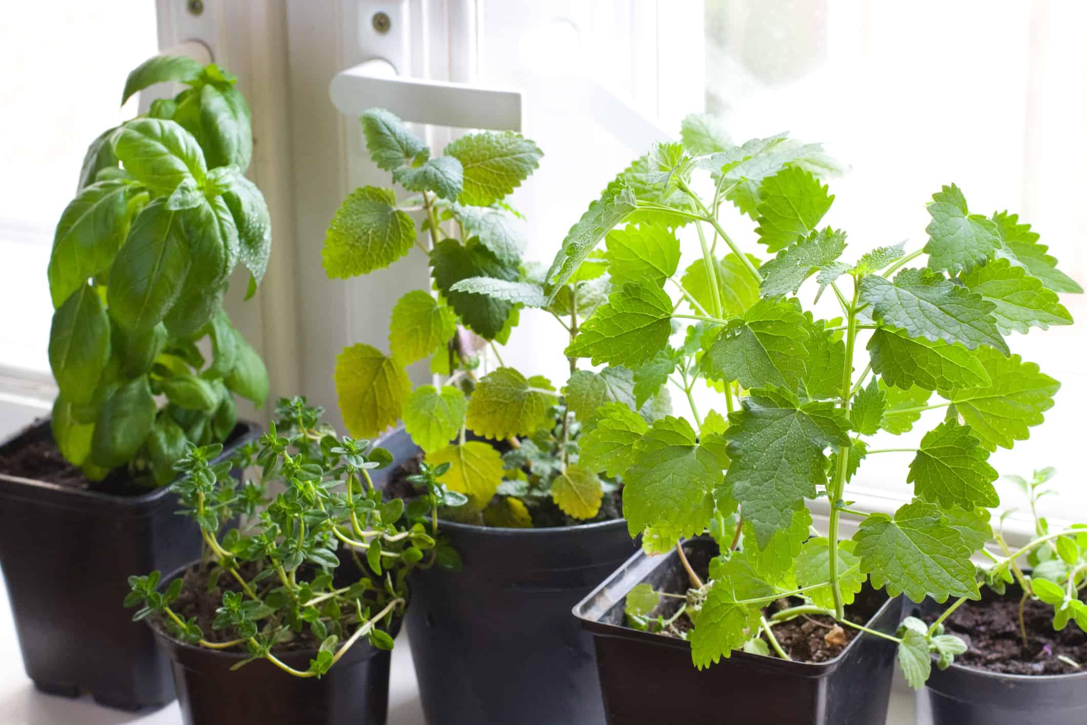 Home Garden Starter Kit